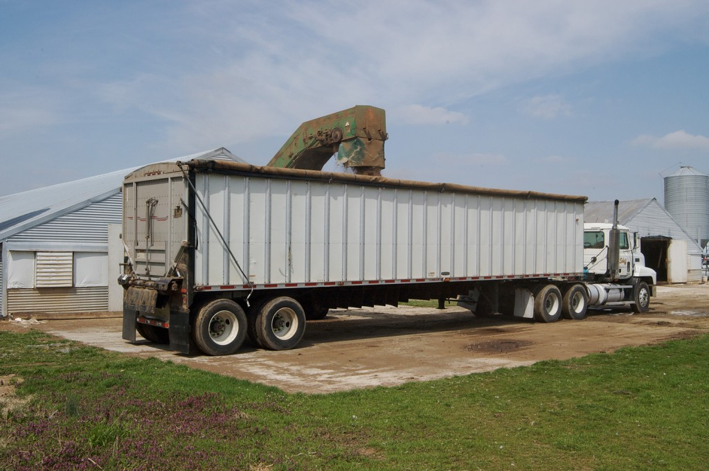 Chicken litter gets loaded on a truck headed to a Perdue processing plant.