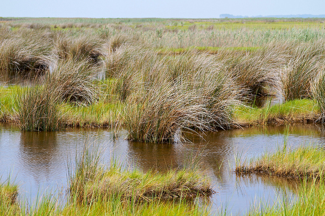 Crisfield marsh (By chesbayprogram on flickr)