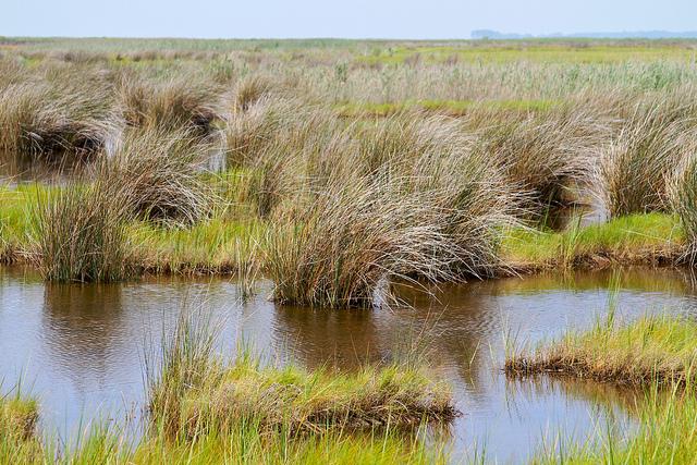 Crisfield marsh (By chesbayprogram on flickr)