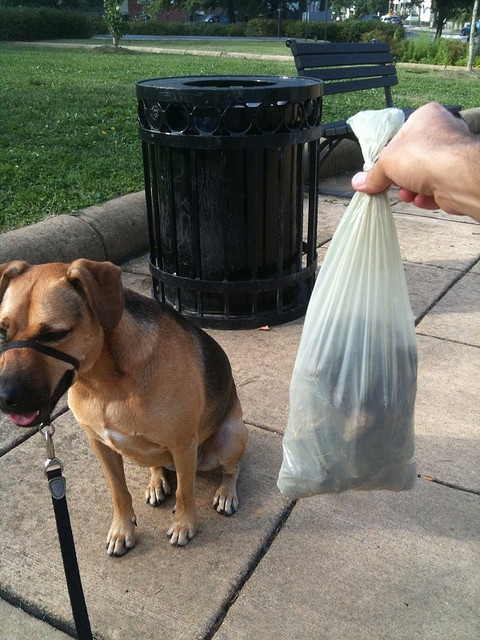 Dog with bag of poop and trash can (By Wayan Vota on Flickr)
