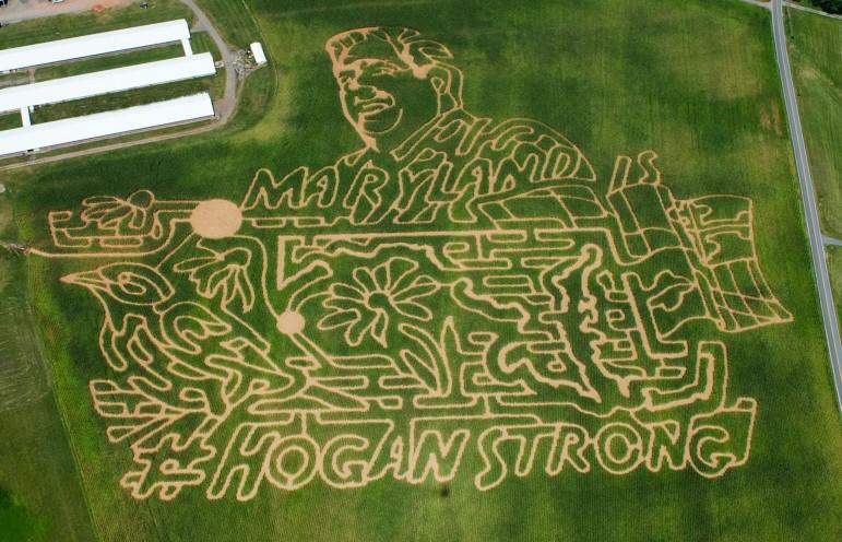 Hogan Strong Corn Maze