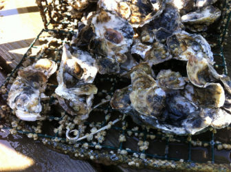Oysters by tenplaces with flickr