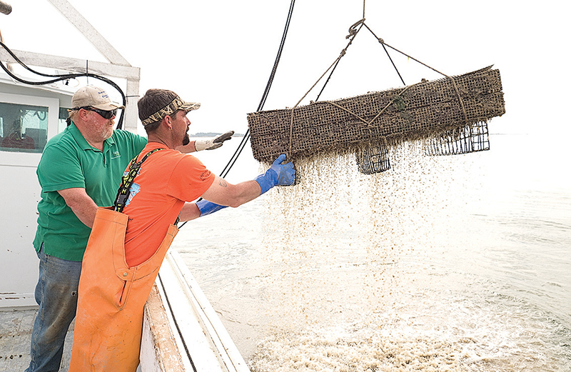 Aquaculture reviving Md. oyster industry – as well as watermen