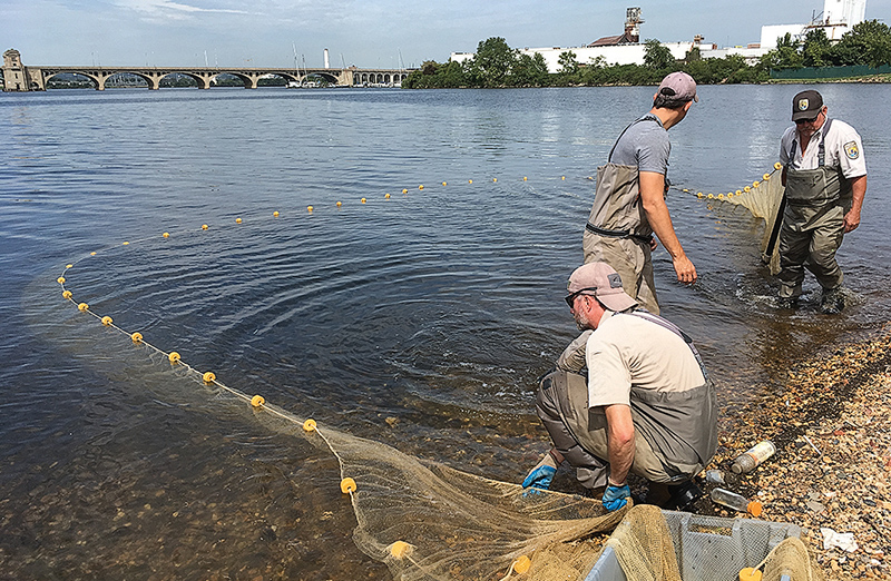 Fish already returning to Patapsco as work begins to take down dam
