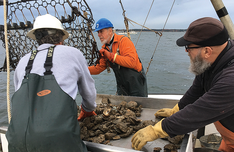 Wild oyster 'bed check' offers glimpse of harvests to come