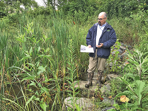 Bay scientists say stream restoration not delivering as much as hoped
