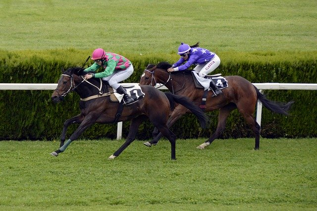 8 Reasons Why Horse Racing Is For You