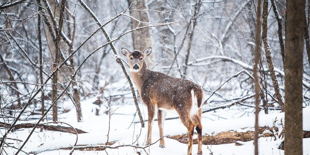 Hunters oppose commercialization of deer hunting